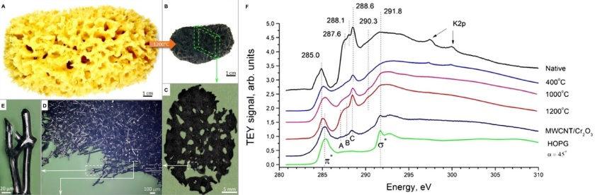 Overview of the transformation of spongin scaffolds to a carbonized 3D structure at 1200°C