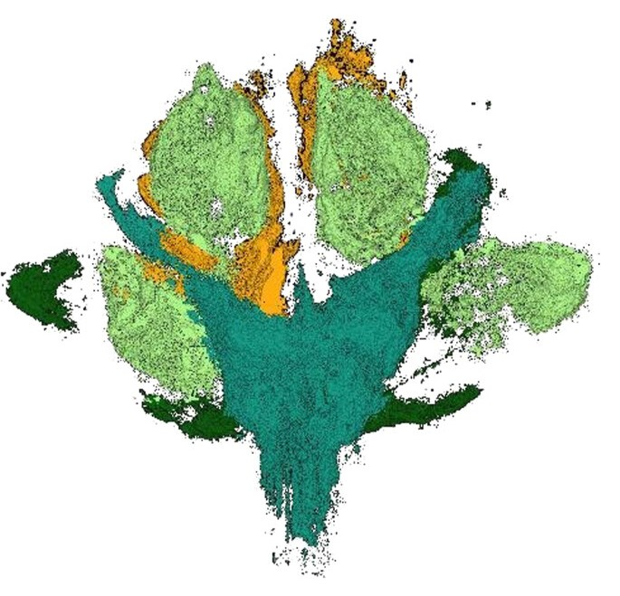 A color code of the CT scan shows details of the plant: main axis (turquoise), leaves (dark green), pistils (light green), petals (orange).