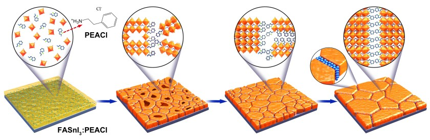 The illustration shows the changes in the structure of FASnI<sub>3</sub>:PEACl films during treatment at different temperatures.