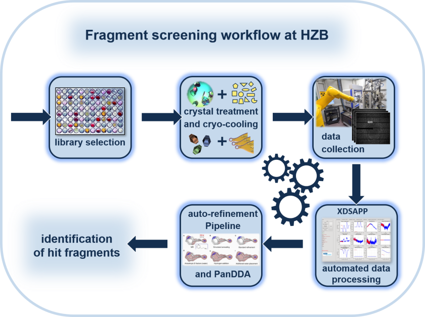 The fragment libraries, which the MX team has assembled together with a group from the University of Marburg, are also available to users at BESSY II. The diagram shows the fragment-screening workflow.