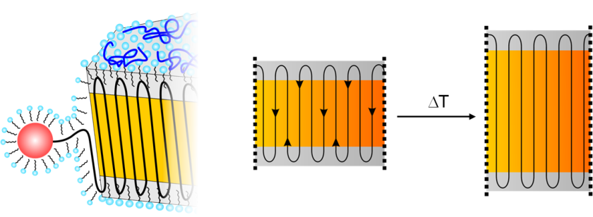 Polymer chain incorporation during formation of ideal PE-nanocrystals by catalytic insertion polymerization with a water-soluble Ni(II) catalyst. The amorphous layers covering both platelets act as the wheels of a pulley just changing the direction of the chains. A moderate raise of the temperature induces sufficient mobility that allows the chains to move within the crystal.