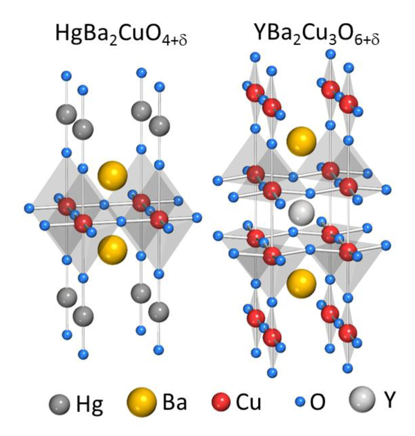 Crystal structures of HgBa<sub>2</sub>CuO<sub>4</sub>+ and YBa<sub>2</sub>Cu<sub>3</sub>O<sub>6</sub>+
