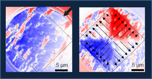X-PEEM images show the orientation of magnetic domains in the permalloy film overlaid on the superconducting dot (dashed square) before (left image) and after the write process (right image). In this sample the domains (arrows, right image) are reorientied in a monopole pattern.