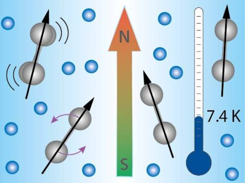 Diatomic nickel ions (gray) are captured at cryogenic temperatures in an RF ion trap; cold helium gas (blue) serves to dissipate the heat. The magnetic field orients the ions. </p> <p>