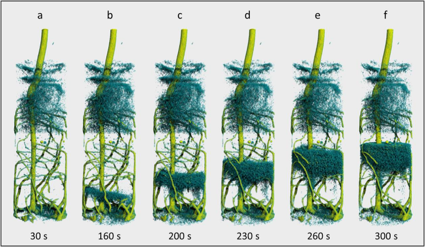Sequential tomography of a lupin root (yellowish green) after deuterated water (D<sub>2</sub>O) was introduced from below. The rising water front (H<sub>2</sub>O, dark blue) is displaced by the D<sub>2</sub>O from below over the course of time. The complete sequence can be viewed as a video. Created by Christian T&ouml;tzke &copy; University of Potsdam