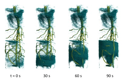 Time-resolved 3D neutron tomography shows the rise of deuterated water in the root system of a lupine plant.