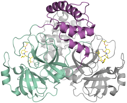 Schematic representation of the coronavirus protease. The enzyme comes as a dimer consisting of two identical molecules. A part of the dimer is shown in colour (green and purple), the other in grey. The small molecule in yellow binds to the active centre of the protease and could be used as blueprint for an inhibitor.