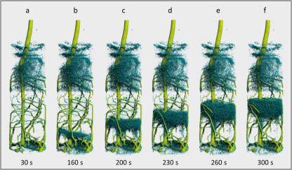 Sequential tomography of a lupin root (yellowish green) after deuterated water (D2O) was introduced from below. The rising water front (H2O, dark blue) is displaced by the D2O from below over the course of time. The complete sequence can be viewed as a video. Created by Christian Tötzke © University of Potsdam
