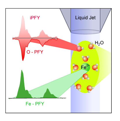 Metal ions in solution can be examined using soft X-ray<br />radiation. In addition to metal ions, the free fluid stream<br />in the vacuum also contains oxygen, which, following X-ray<br />irradiation, begins to glow, ultimately affecting metal ion<br /> absorption. Researchers can now calculate the metal ions'<br /> absorptive strength and make inferences regarding the<br />ions' electronic structures.<br /> Fig: HZB
