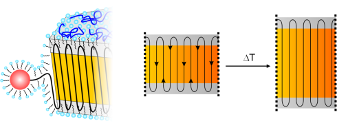 <p>Polymer chain incorporation during formation of ideal PE-nanocrystals by catalytic insertion polymerization with a water-soluble Ni(II) catalyst. The amorphous layers covering both platelets act as the wheels of a pulley just changing the direction of the chains. A moderate raise of the temperature induces sufficient mobility that allows the chains to move within the crystal.</p>