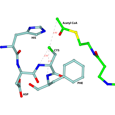A key feature of the active site of the trypanosomal thiolase is the HDCF-loop (HIS-ASP-CYS-PHE), visualised in light blue. Image: University of Oulu