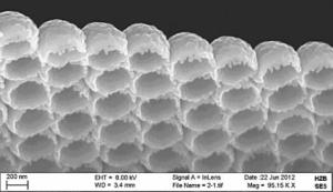 <p>At the HZB Institute for Solar Fuels, also nanostructures in metal oxides are explored as efficient catalyst materials for artificial photosynthesis. Credit: HZB</p>