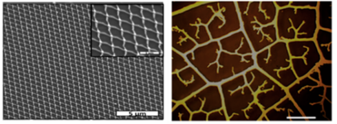 <p>SEM – model of a metallic nano-network with periodic arrangement ( left) and visual representation of a fractal pattern (right). Credit: M. Giersig/HZB</p>